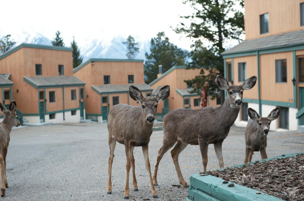 Wildlife at the Douglas Fir Resort